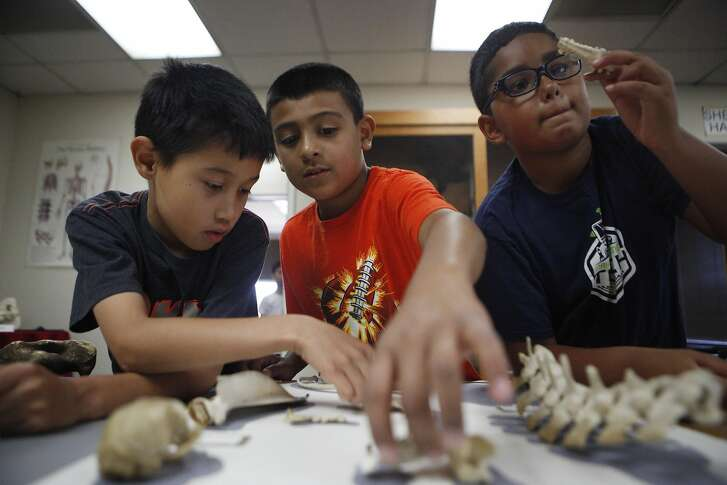 Gabriel Linares, Jaden Marquez, Aiden Okyar play a fossil matching game on Wednesday, June 29, 2016 at the Children's Natural History Museum in Fremont, California.  The 50 Ice Age-era fossils have been undergoing testing and recently went on display at the Children's Natural History Museum. They have been identified as bison and a mouse and also, mission cows from about 300 years ago.