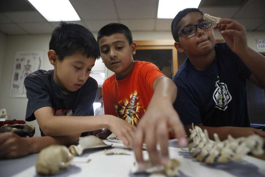 Gabriel Linares (left), Jaden Marquez and Aiden Okyar try to match fossils at the Fremont museum. Photo: Michael Noble Jr., The Chronicle