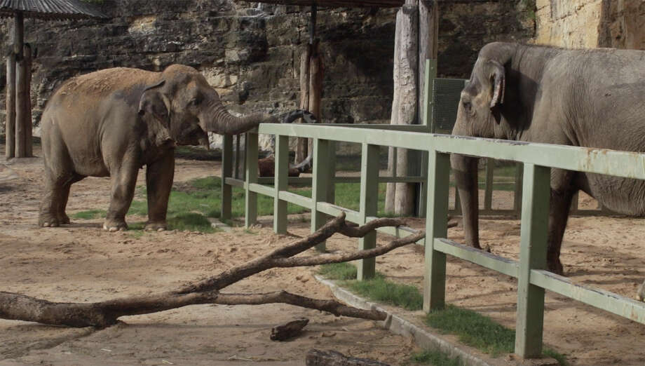 """At left """"Nicole,"""" a 40-year-old elephant, and """"Lucky,"""" a 56-year-old Asian elephant, get together at the San Antonio Zoo. Photo: Courtesy, San Antonio Zoo"""