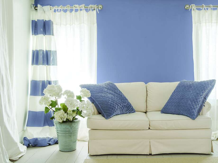 On a wall with ivory curtains and sofa, Violet Verbena looksmore purple.