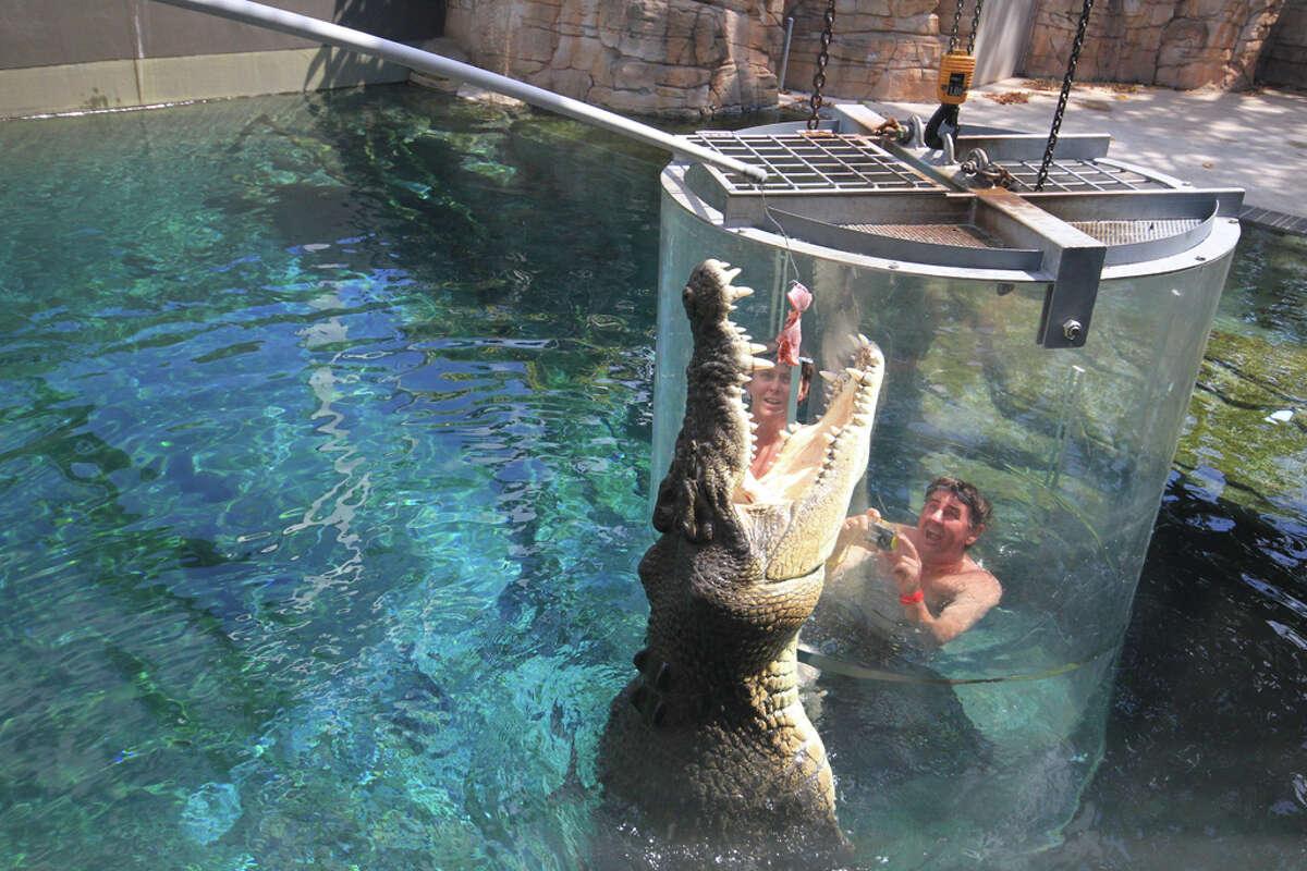 In Australia, you can go swimming with a massive crocodile at a theme park.