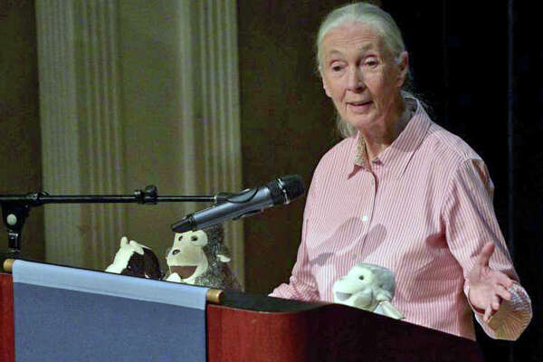 Jane Goodall, the world-renowned primatologist and conservationist, at Western Connecticut State University's mid-town campus in 2015.