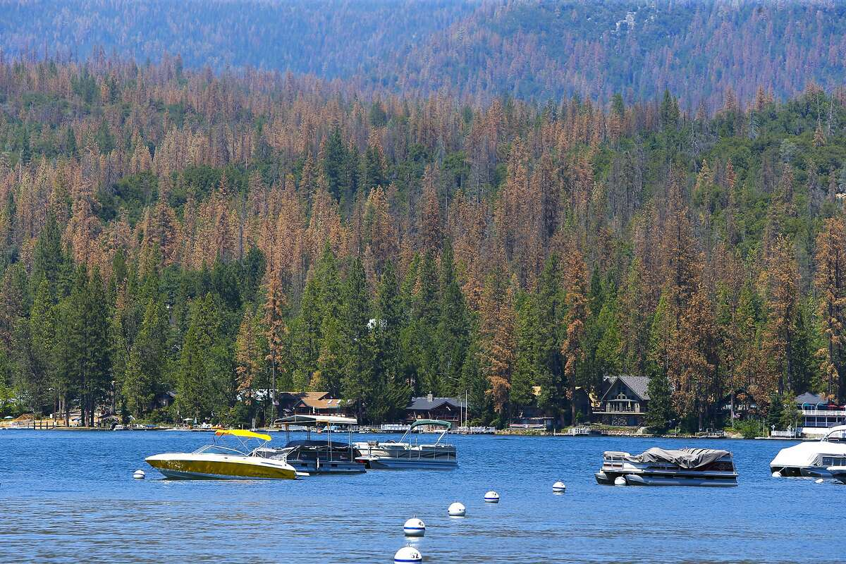 Hundreds of Ponderosa Pine trees infested with the Western Pine Beetle are being removed from around Bass Lake near Oakhurst, California on Wed. June 29, 2016. Tens of thousands of trees killed by drought are being removed to prevent fire danger but since there's no place to put them, they're being stacked along roads or piled near homes.
