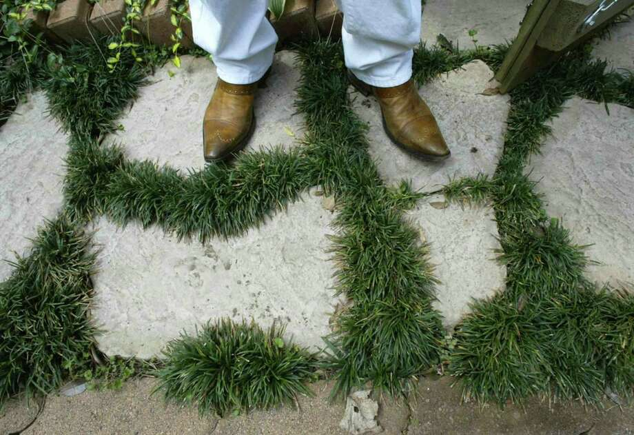 Low-water user landscaping: Mondo grass between stepping-stones is an attractive combo. Photo: M.L. Gray / Fort Worth Star-Telegram / Fort Worth Star-Telegram/Rodger Mallison