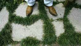 Low-water user landscaping: Mondo grass between stepping-stones is an attractive combo.