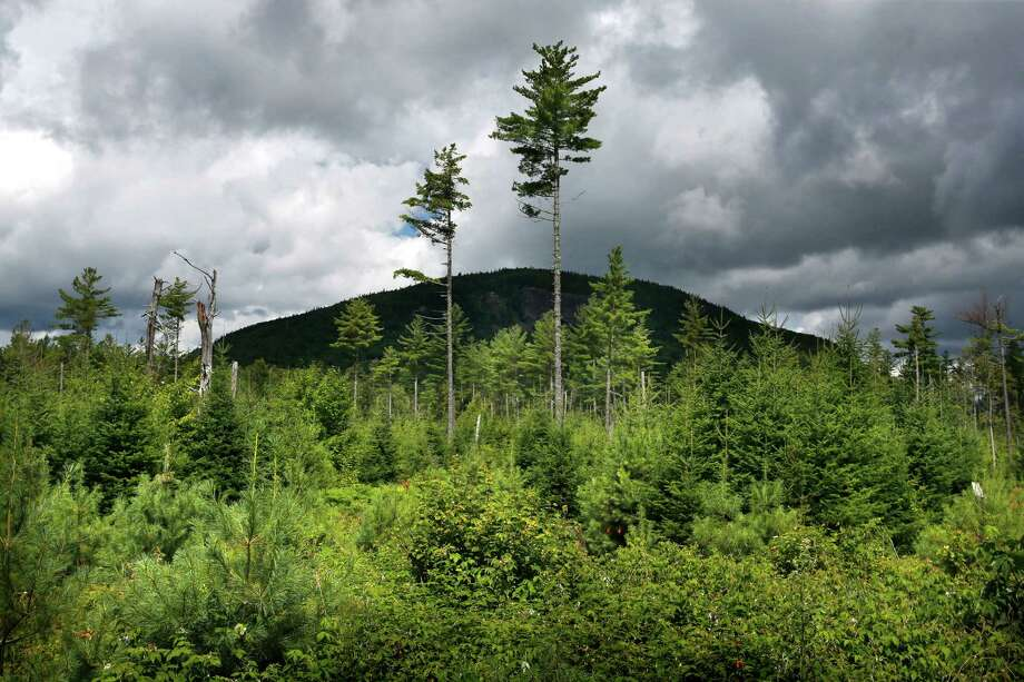 FILE - In this Aug. 5, 2015 file photo, a forest grows back beneath a few uncut white pines several years after it was logged near Soubunge Mountain in northern Maine. In a study of suicide rates by occupation, the workers who killed themselves most often were farmers, lumberjacks and fishermen. Researchers found the highest suicide rates in manual laborers who work in isolation and face unsteady employment. The report from the Centers for Disease Control and Prevention was released Thursday, June 30, 2016. (AP Photo/Robert F. Bukaty) Photo: Robert F. Bukaty, STF / Copyright 2016 The Associated Press. All rights reserved. This material may not be published, broadcast, rewritten or redistribu