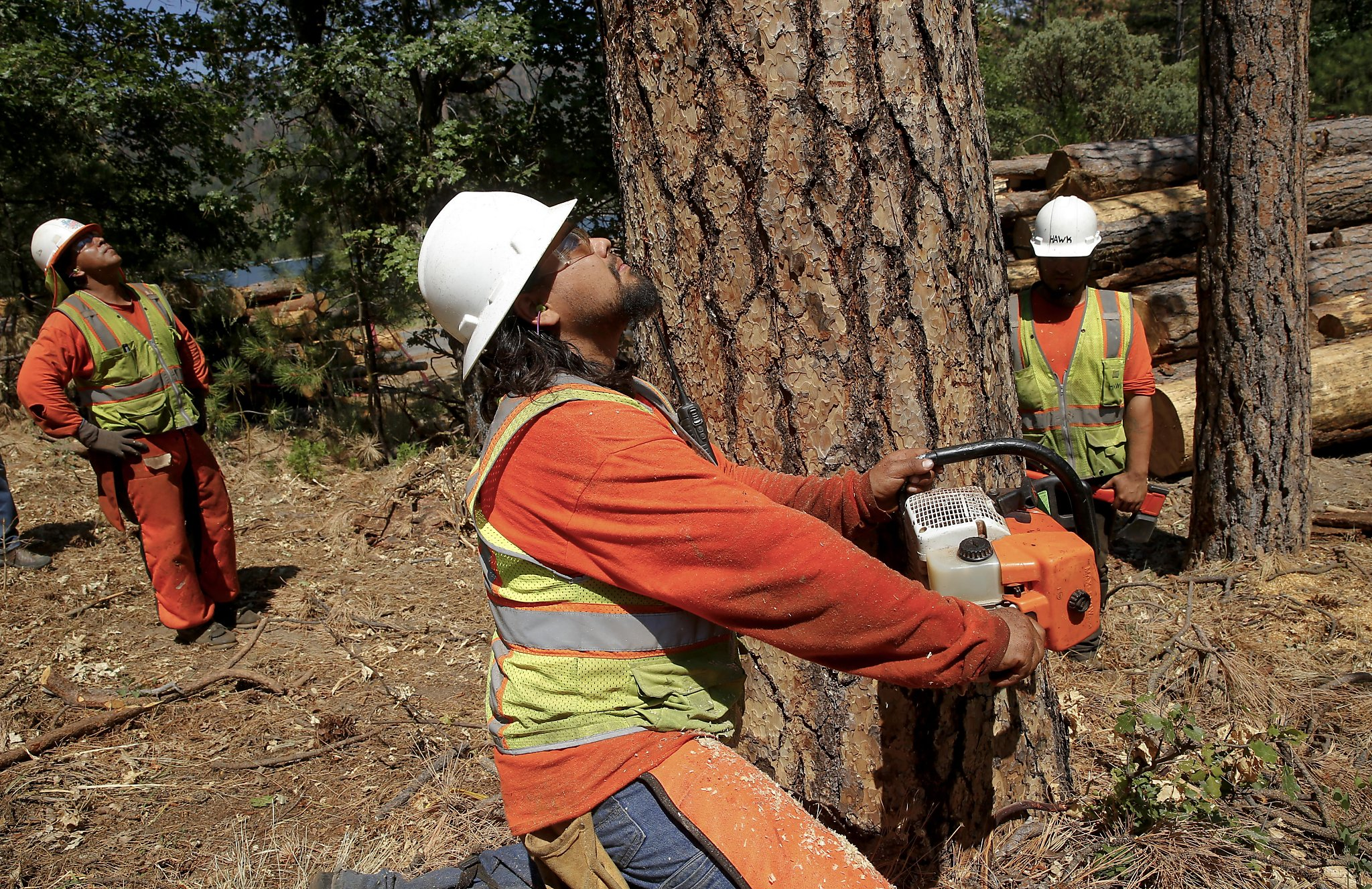 California Has 66 Million Dead Trees But Nowhere To Put The Wood Sfchronicle