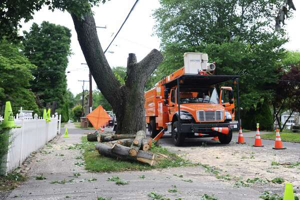Remnants of a tree sit on Lenox Ave. after they were removed on Tuesday, June 28, 2016. The trees were marked by Eversource months ago for removal, and after approval from the city of Stamford were removed.