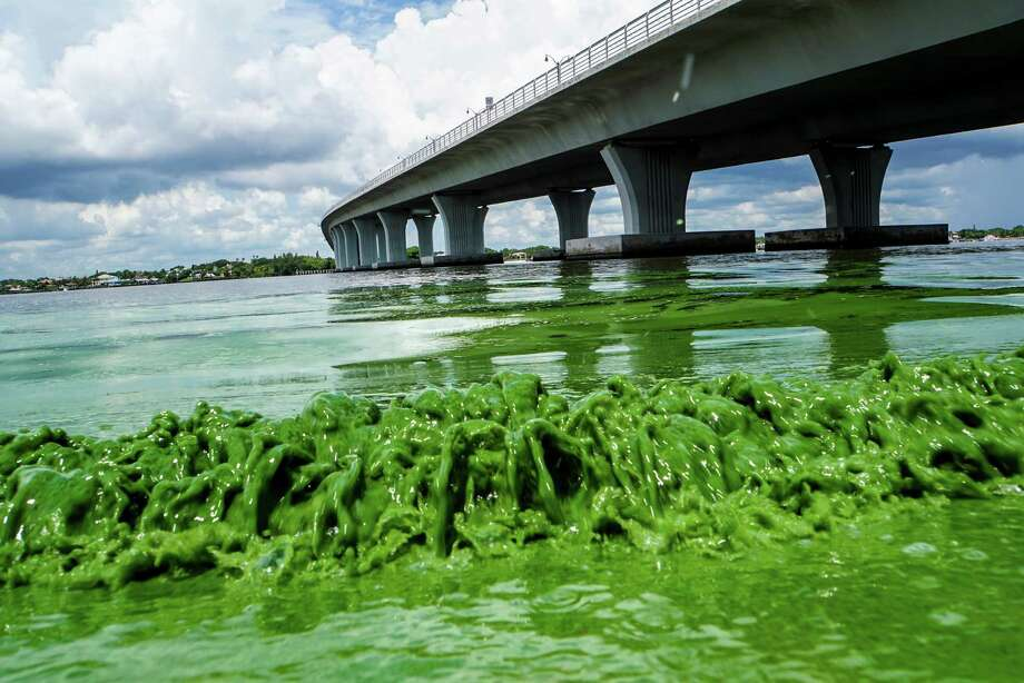 Water full of algae, the result of a heavy year of rainfall in Florida, laps along the Sewell's Point shore on the St. Lucie River under an Ocean Boulevard bridge.  Photo: Richard Graulich, MBO / The Palm Beach Post