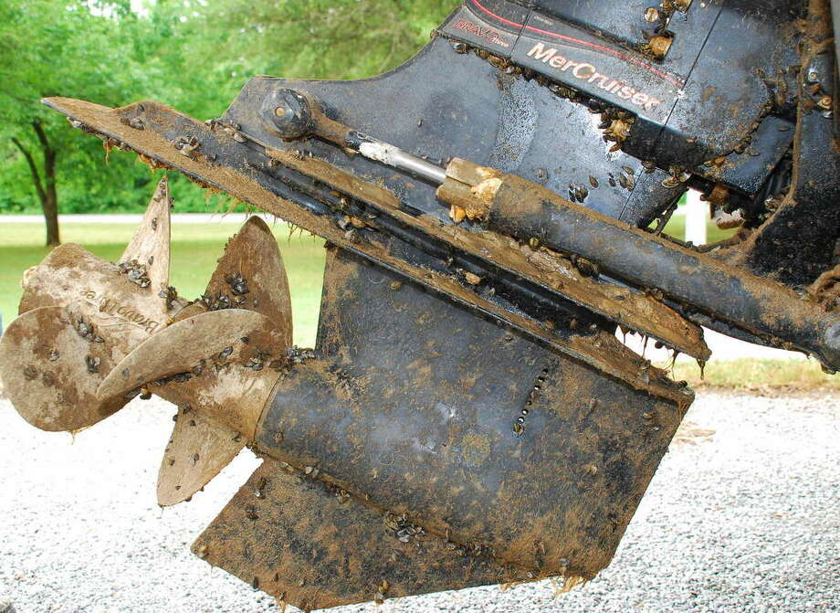 "Boaters are the most common vector spreading zebra mussels, and Texas laws mandate boaters ""clean, drain, dry"" their vessels after leaving the water. Photo: Texas Parks And Wildlife Department"