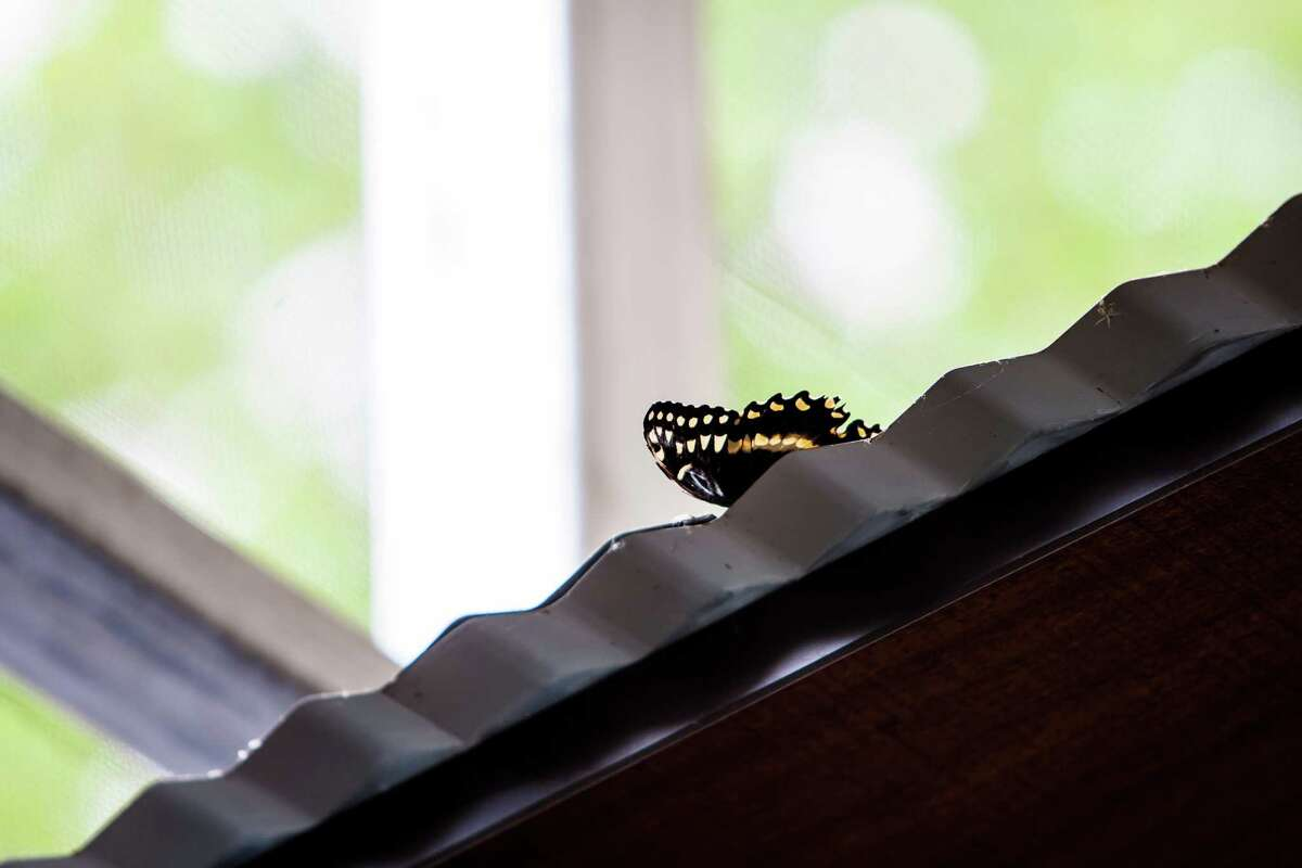 A butterfly sits on top of the entrance to Molbak's Butterfly Garden.