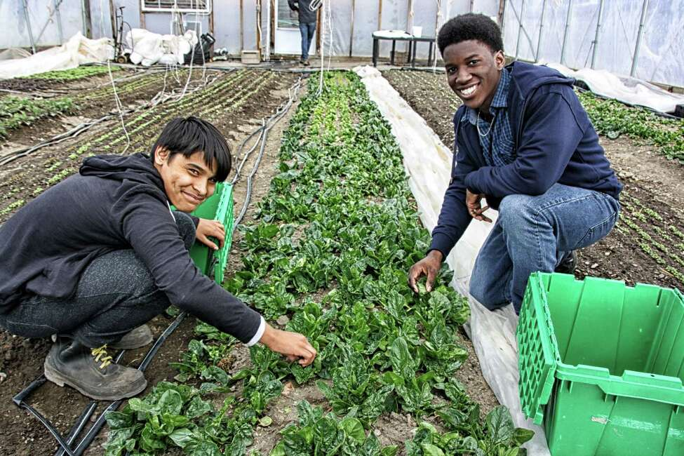 Participants harvest early spring plants at Capital Roots' Produce Project greenhouses in 2016. (Provided photo)