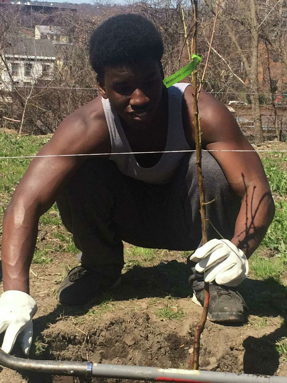 A participant helps plant an orchard for Capital Roots' Produce Project in 2016. (Provided photo)
