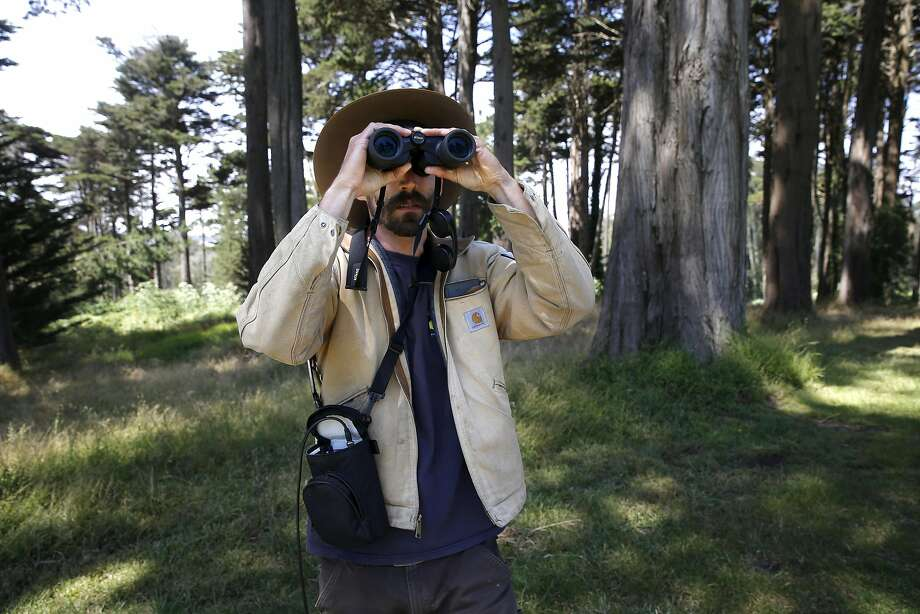 Jonathan Young, wildlife ecologist for the Presidio Trust, searches for coyotes as part of his tracking project, following six of the creatures that are known to live in the Presidio. Photo: Michael Macor, The Chronicle