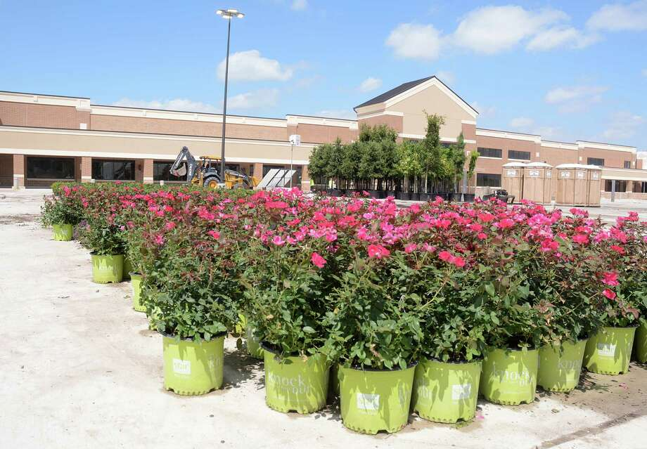 Landscape vegetation stands ready to be planted at the Westlake Marketplace, at the intersection of West Lake Houston Parkway and Beltway 8. The shopping area is expected to open in the Lake Houston area later this year. Photo: Z-David Hopper