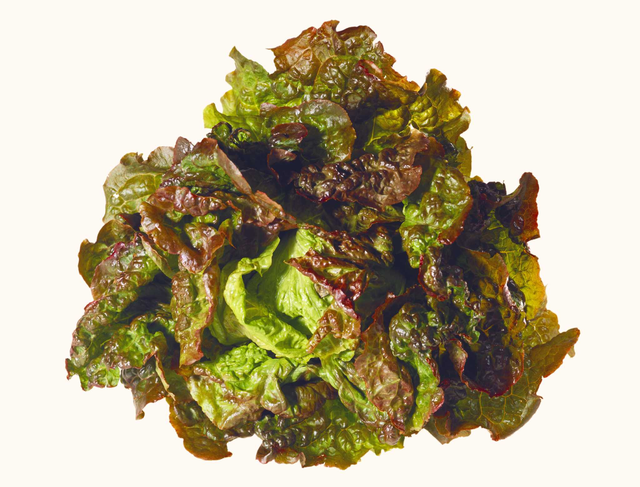 Know your salad greens - Times Union