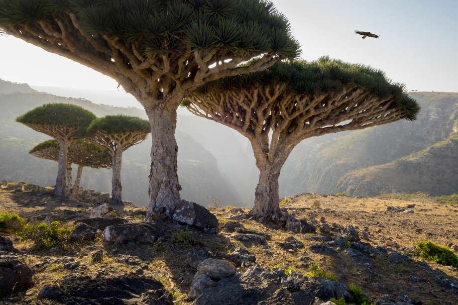 "Gallery: Beautiful pictures of Earth that look like they were shot on another planet""Dragon blood trees in rocky landscape, Homhil Protected Area, Socotra, Yemen"" Photo: John Lund/Getty Images/Blend Images"