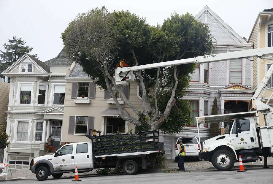 A crew from the San Francisco Department of Public Works trims a tree on Dolores Street. Photo: Paul Chinn, The Chronicle