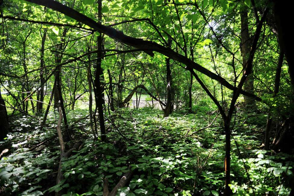 A view looking towards the fenced dog area from a wooded section at Westland Hills park on Tuesday, June 7, 2016, in Albany, N.Y. There is lead contamination below the surface in this wooded area. (Paul Buckowski / Times Union)