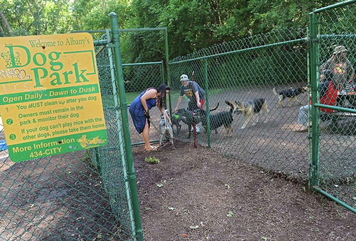Westland Hills Dog Park. Just off Colvin Avenue in Westland Hills Park in Albany. Website