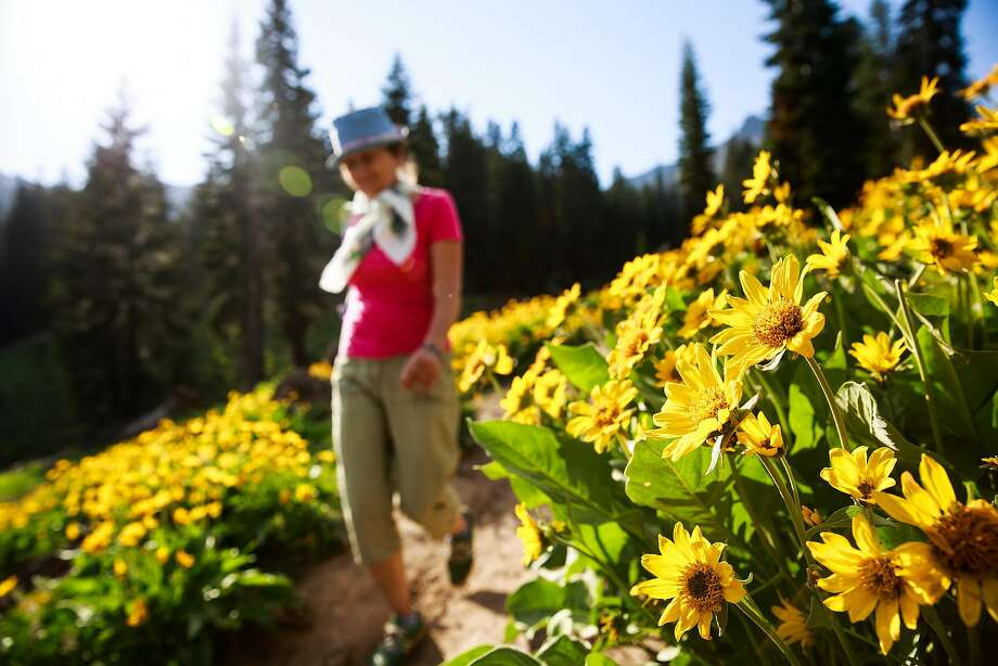 Hikers make their way through wildflowers on the Ridge Lakes trail in Lassen Volcanic National Park. Photo: Max Whittaker/Prime, Special To The Chronicle