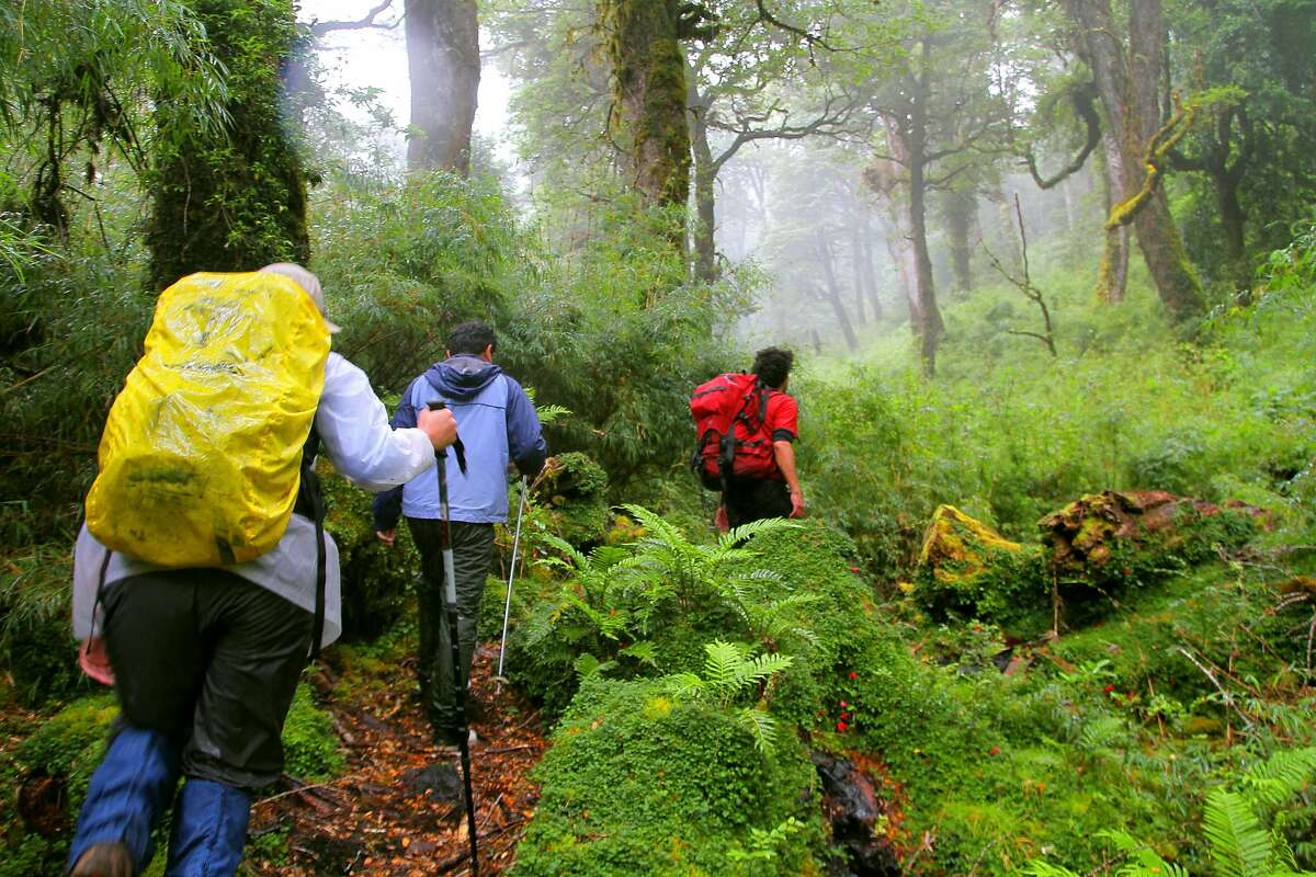 Hikers follow a trail through the Puyuhuapi Rain Forest in Chile.