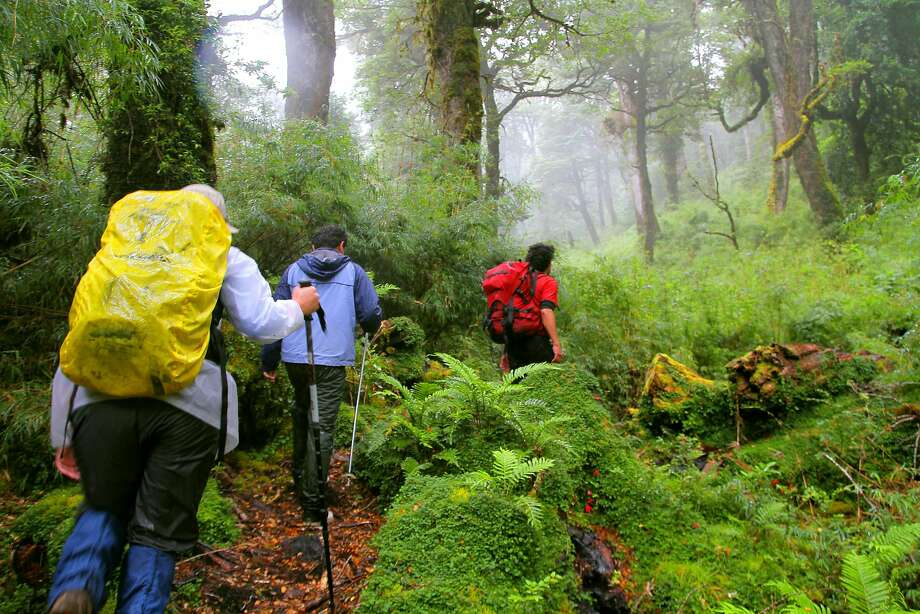 Hikers follow a trail through the Puyuhuapi rain forest in Chile. Photo: Pablo Ocqueteau, Puyuhuapi Lodge & Spa