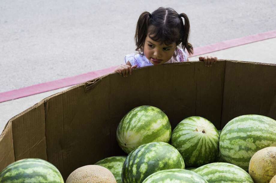 Arabelle Vigil, 2, studies a bin full of watermelons as her mother shops for produce at the San Antonio Food Bank Farmers Market at Wheatley Middle School. Like all SAFB markets, this one accepts WIC, senior vouchers, SNAP and EBT payments. Photo: Express-News File Photo / © 2016 San Antonio Express-News