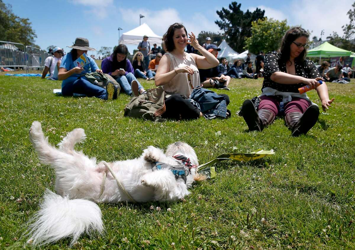 Mr. Mister rolls in the grass while he waits with Sandra Bedynek (center) and Leila N'amara for Hot Wave Heat Flash to take the stage during the Phono del Sol music festival at Potrero del Sol Park in San Francisco, Calif. on Saturday, July 9, 2016.