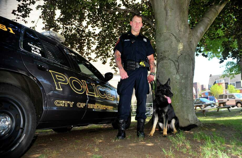 Bridgeport police officer Ryan Mullenax stands by his new police dog, Zeus, at Bridgeport Police Department headquarters. Photo: Christian Abraham / Hearst Connecticut Media / Connecticut Post