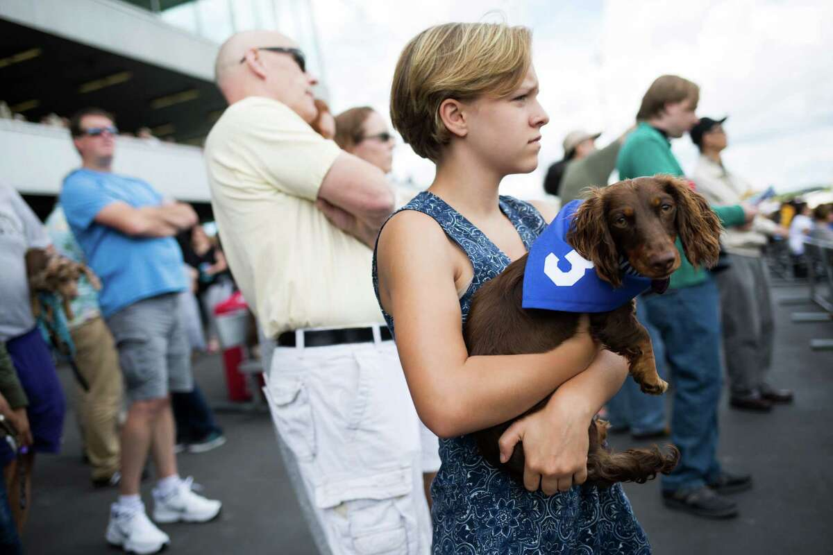Eleanore Martin-Bravo holds Ethel before a heat in the Emerald Downs Wiener Dog races in Auburn on Sunday, July 10, 2016.