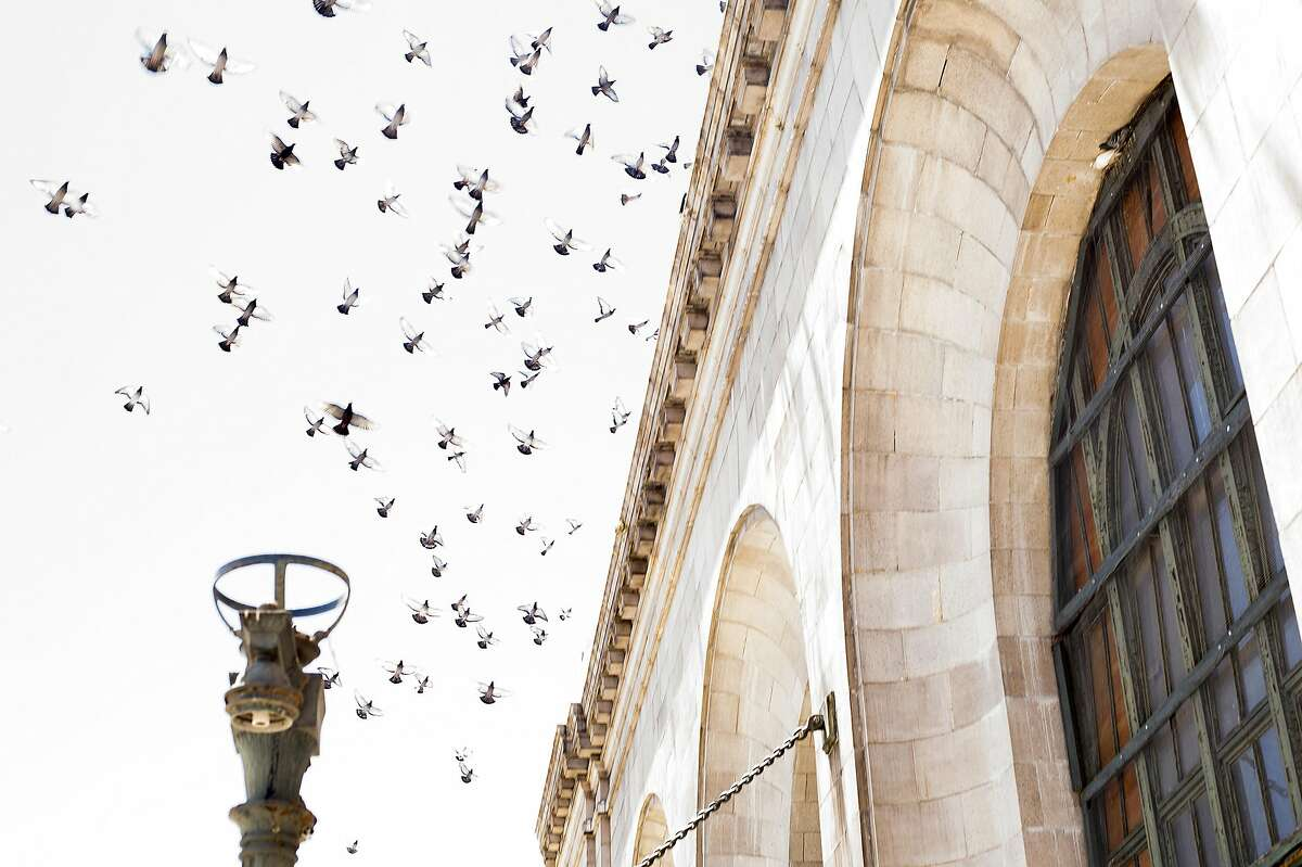 Birds fly above the Oakland 16th Street Station. This summer, West Edge Opera will stage three operas at the long vacant rail station.