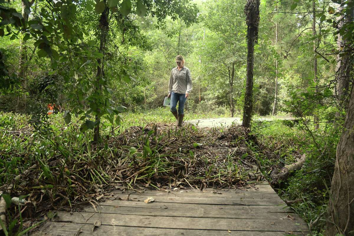 Stephanie Prosser, Bayou Land Conservancy Interim Executive Director, walks over the water hyacinth, an invasive plant, that has washed onto the trails at Spring Creek Greenway Nature Center, 1300 Riley Fuzzel Road in Spring. Photograph by David Hopper