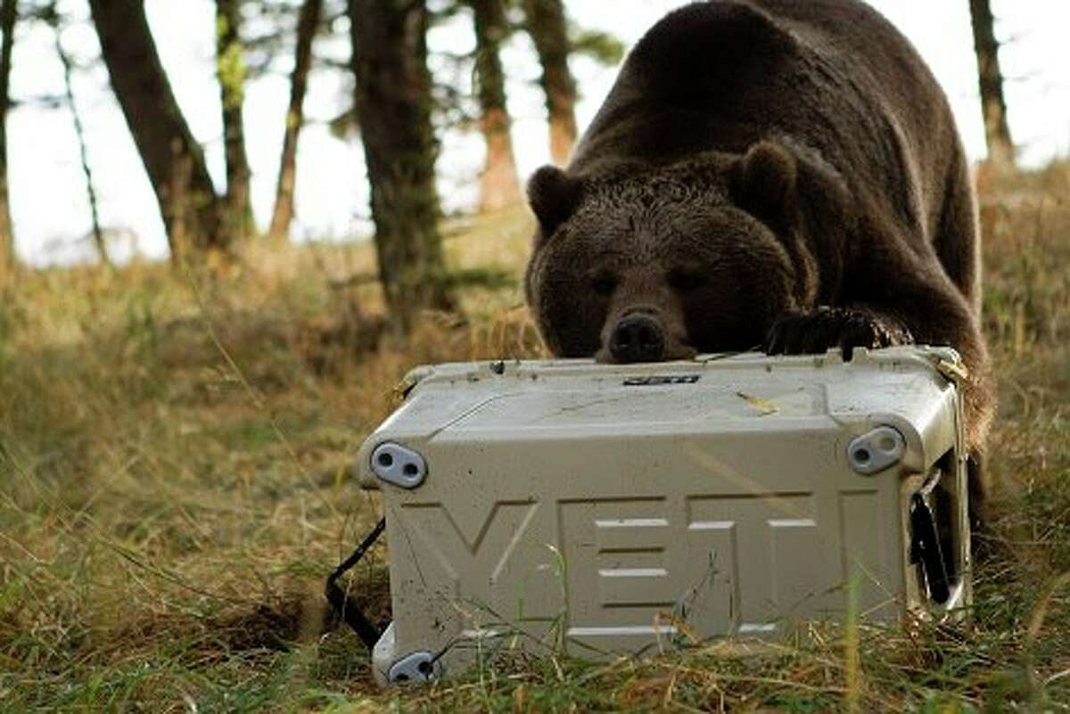 25 facts about YETI coolers Whether they are holding the most precious of cargo on a fishing trip -- your beer -- or keeping your iced drink cold, YETI's coolers and drinkware have managed to become a part of the pop-culture landscape in Texas and beyond.  Click through to learn more about this rugged Austin-based brand...