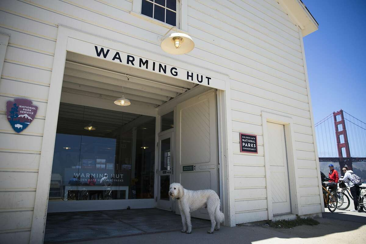 Ollie, an eight-year-old Labradoodle, stands outside the Warming Hut in the Presidio as he waits for his owner in San Francisco, Calif. on Tuesday, July 12, 2016.
