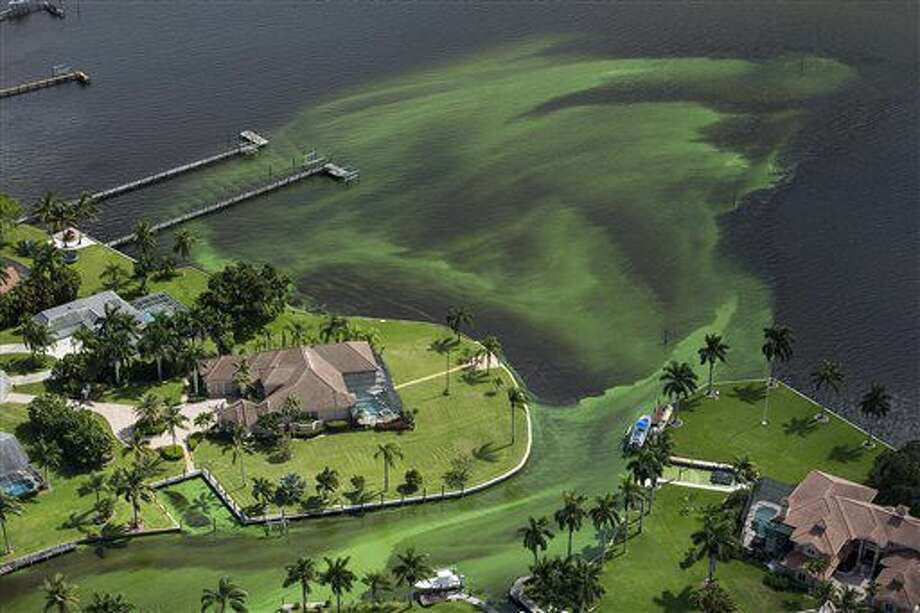 An aerial photo shows blue-green algae enveloping an area along the St. Lucie River in Stuart, Fla.,Wednesday, June 29, 2016 Officials want federal action along the stretch of Florida's Atlantic coast where the governor has declared a state of emergency over algae blooms. The Martin County Commission is inviting the president to view deteriorating water conditions that local officials blame on freshwater being released from the lake, according to a statement released Wednesday. (Greg Lovett/The Palm Beach Post via AP) Photo: Greg Lovett