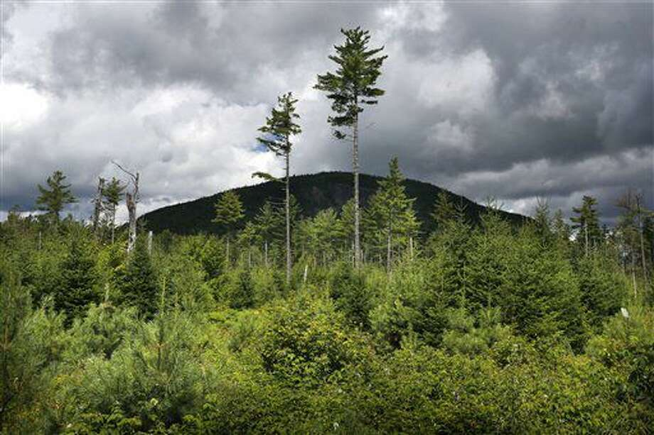 Esat foto tomada el 5 de agosto del 2015 muestra a un bosque volviendo a crecer debajo de unos pinos blancos, años después de que fue talado, cerca de Soubunge Mountain, en el norte de Maine. Campesinos, leñadores y pescadores tienen los índices de suicidios más altos en Estados Unidos, mientras que los bibliotecarios y educadores tienen los más bajos, de acuerdo con un amplio estudio divulgado el jueves 30 de junio del 2016, que halló diferencias enormes entre ocupaciones. (Foto AP /Robert F. Bukaty) Photo: Robert F. Bukaty