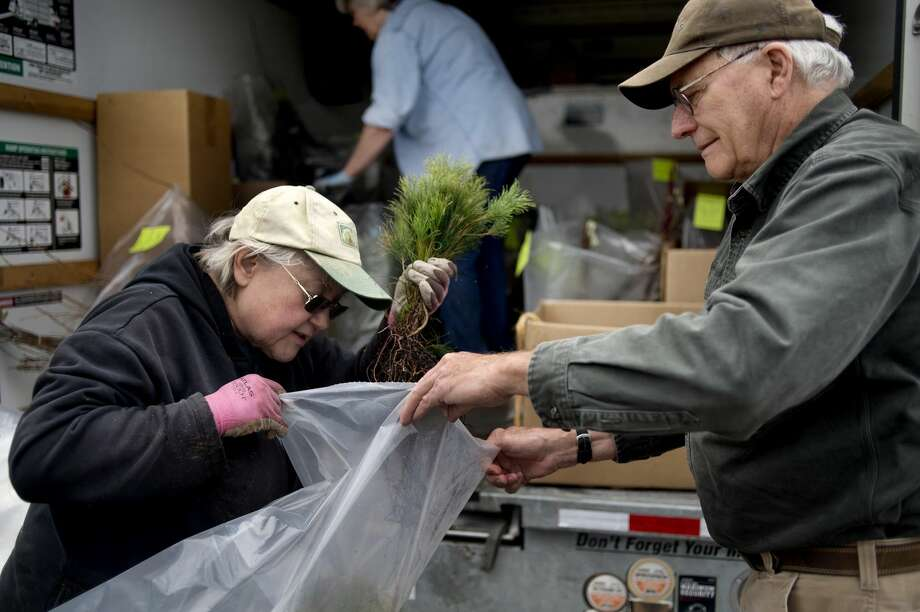 Midland Conservation District board member Mary Johnson, left, collects white pine and dogwood saplings for Fred Swinehart of Midland at the Midland U.S. Department of Agriculture Service center on Thursday afternoon. Swinehart purchased 20 white pine saplings for his cottage and five dogwood saplings for his home. Photo: Brittney Lohmiller/Midland Daily News