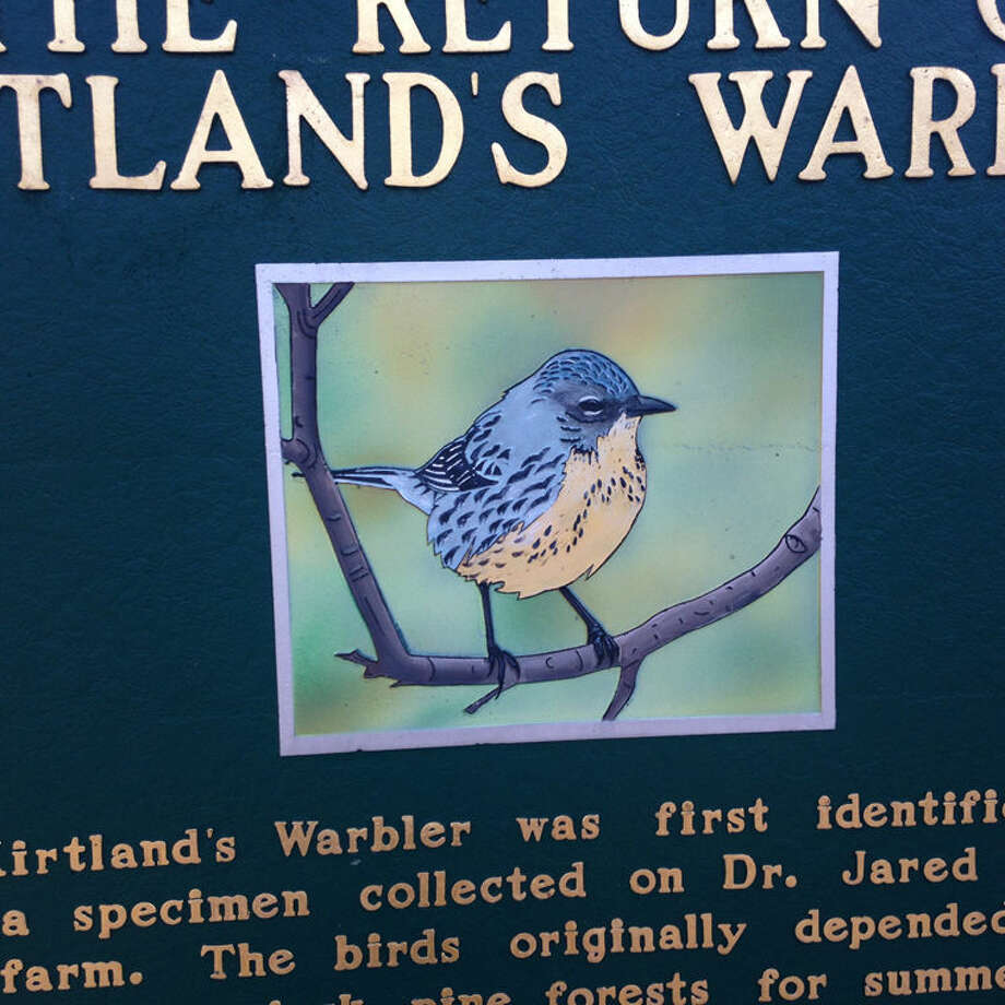 This is a detail from a historical marker at a U.S. 127 rest area near Grayling, in the heart of the Kirtland's warbler's Michigan nesting range.