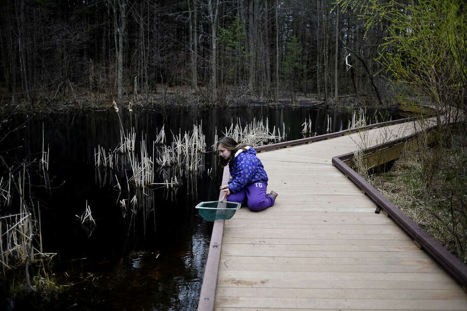 Floyd Elementary fourth-grader Maegan Carpenter, 10, searches for leeches, turtles and more during an outdoor lesson on Tuesday at the Chippewa Nature Center. Photo: Erin Kirkland | Midland Daily News