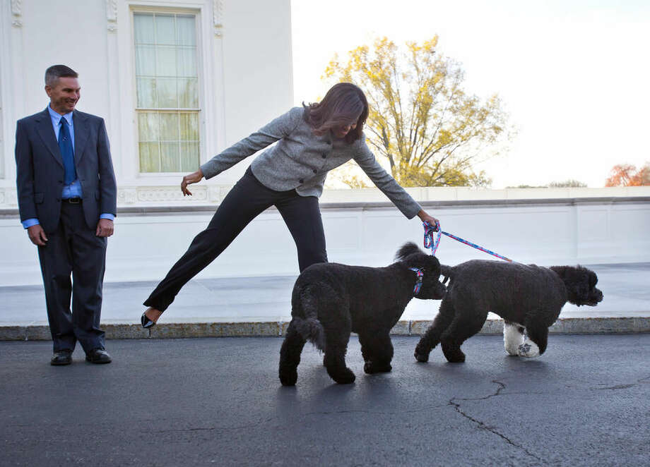FILE - In this Nov. 27, 2015, file photo, first lady Michelle Obama is pulled away by her dogs Bo and Sunny, after welcoming the Official White House Christmas Tree to the White House in Washington. It's hardly a dog's life of just eating and sleeping for President Barack Obama's pets Bo and Sunny. The Portuguese water dogs are popular canine ambassadors for the White House. They've become so in demand that they have schedules, like the president. Photo: AP Photo/Pablo Martinez Monsivais, File