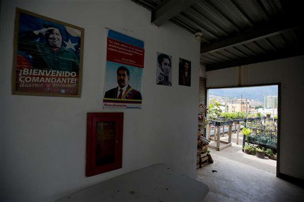 En esta imagen, tomada el 1 de junio de 2016, retratos del fallecido expresidente de Venezuela Hugo Chávez (izquierda), el actual mandatario, Nicolás Maduro (centro) y el héroe independentista Simón Bolívar decoran la azotea en la que Francisco Salazar cultiva vegetales, en Caracas, Venezuela. Con la ayuda de una campaña en favor de la agricultura urbana patrocinada por el gobierno, la jefa del recién creado ministerio de Agricultura Urbana, Lorena Freitez, aspira a que los cultivos en las zonas urbanas podrán cubrir el 20% del consumo de alimentos en las ciudades para el 2019. (AP Foto/Fernando Llano)