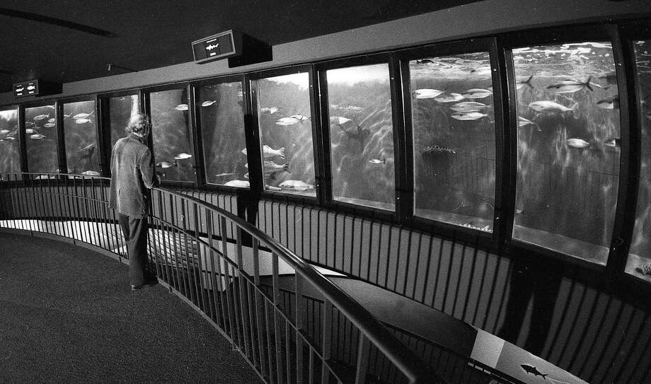 On May 5, 1977, a man gazes into the Steinhart Aquarium fish roundabout at the California Academy of Sciences. Photo: Vincent Maggiora, The Chronicle