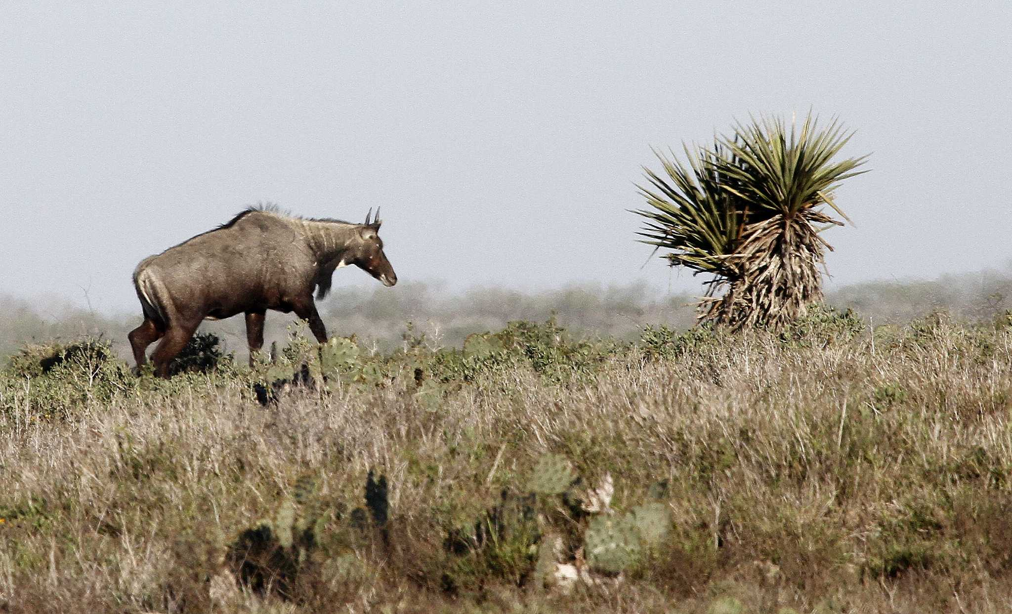 Texas parks and wildlife department expands its options to