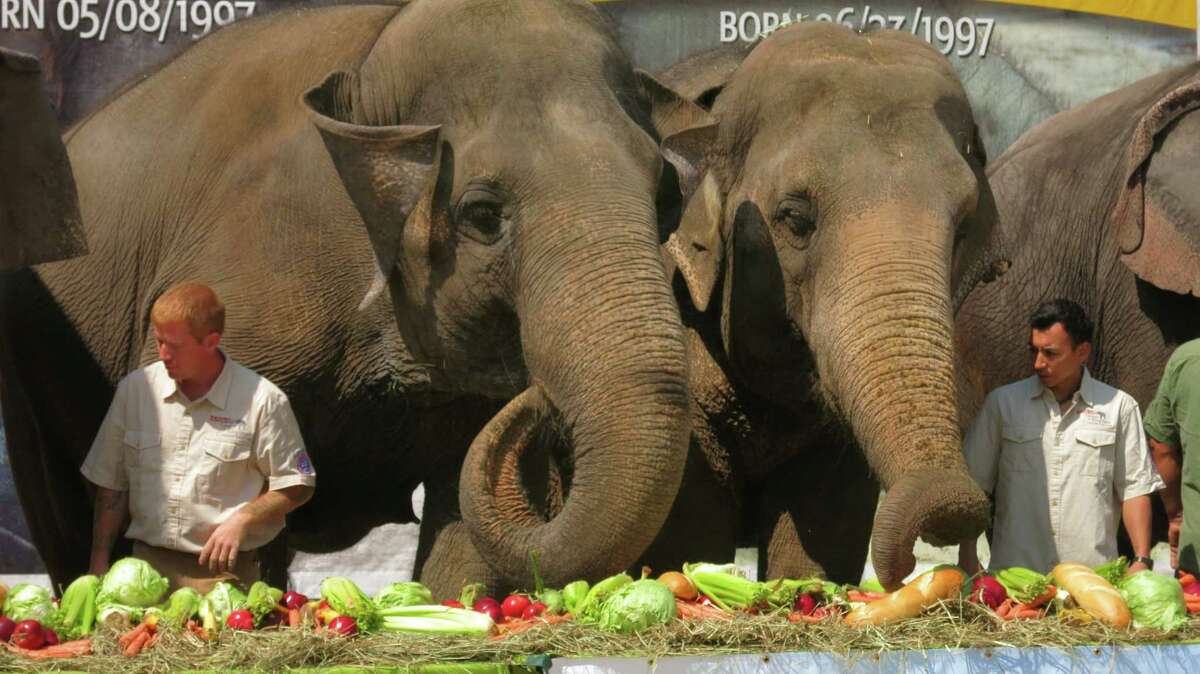Vegetarians An adult elephant must eat 300 to400 lbs. of plant food a day.