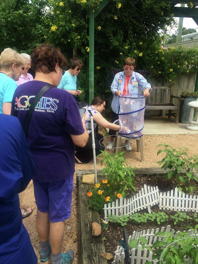 Joan Maresca (right), a resident of Eagle's Trace, coordinates the release of Painted Lady butterflies in the retirement community's garden on June 1.