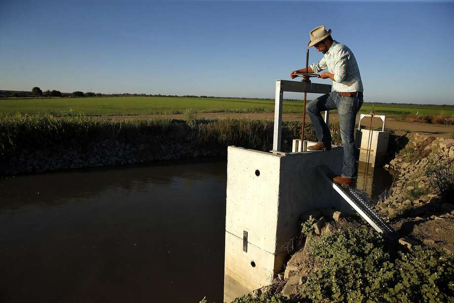 Jacob Katz, California Trout senior scientist, opens a screw gate at rice fields in Woodland (Yolo County). Photo: Scott Strazzante, The Chronicle