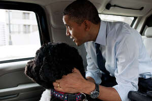 """2011:  """"""""The President and Bo, the Obama family dog, ride in the presidential motorcade en route to PetSmart in Alexandria, Va. The President bought Bo some Christmas gifts at the pet store then walked nearby to Best Buy to purchase gifts for his daughters."""" - Pete Souza"""