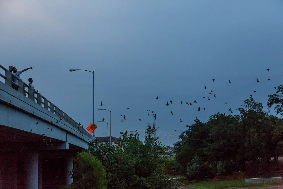 People stand on the Waugh Street bridge to watch the nightly emergence of Mexican free-tailed bats. Photo Credit: Kathy Adams Clark. Restricted use.