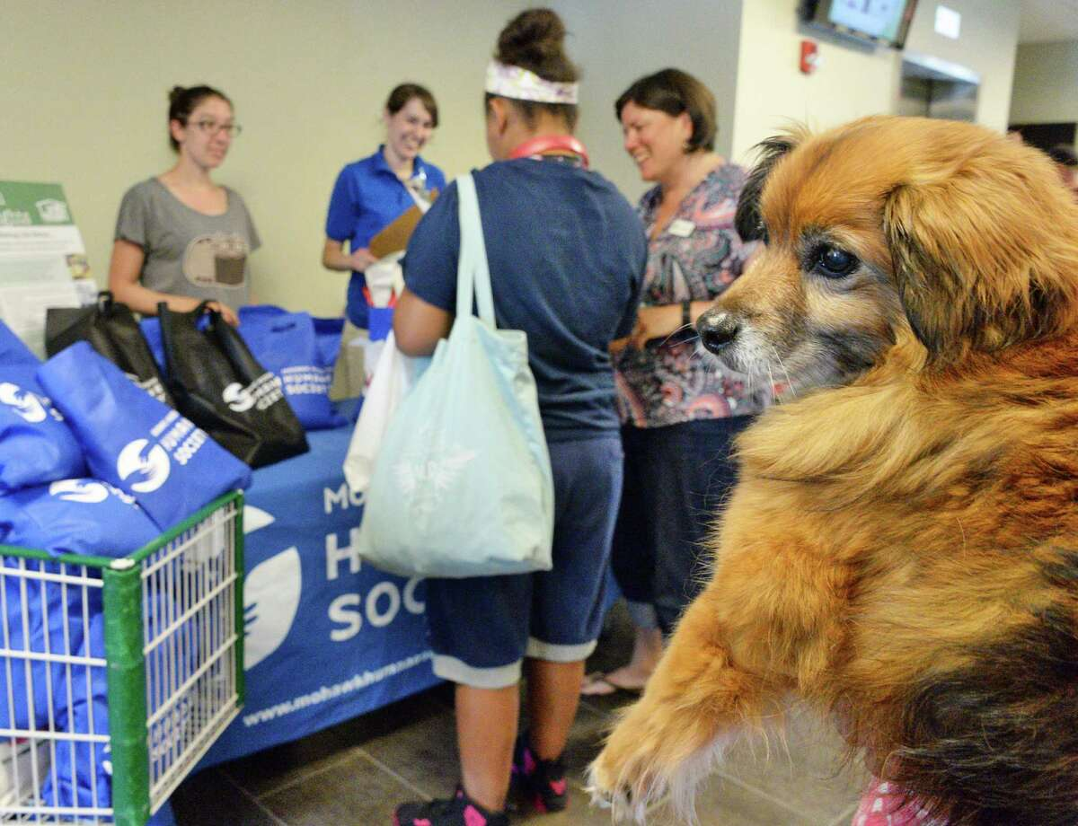 Volunteer therapy dog Kingston watches carefully as Unity House hosts a Pet Food Pantry program by PetFlow and the Mohawk Hudson Humane Society Friday July 15, 2016 in Troy, NY. (John Carl D'Annibale / Times Union)